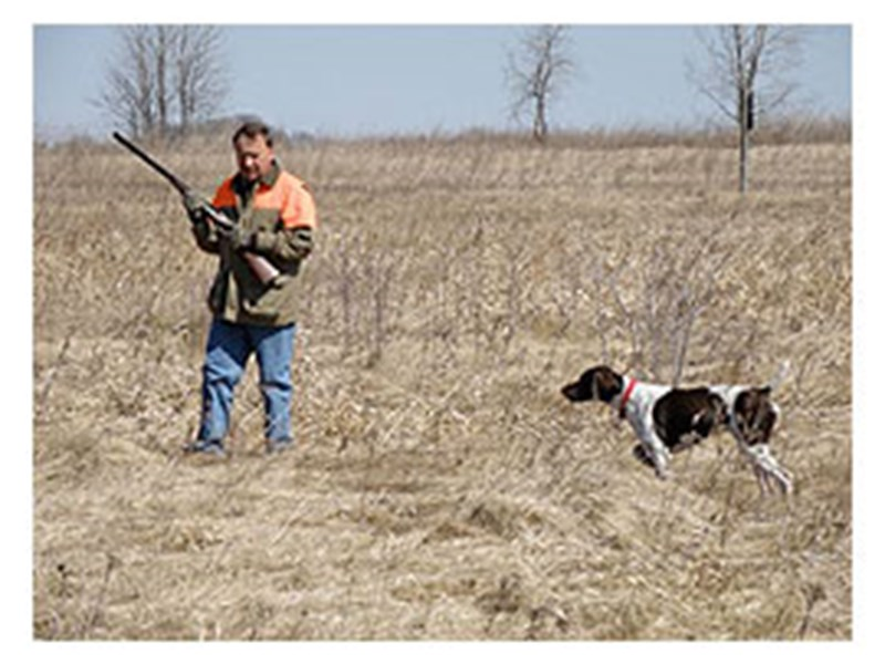 Training   Sundance Kennels - Pet Boarding, German Shorthair